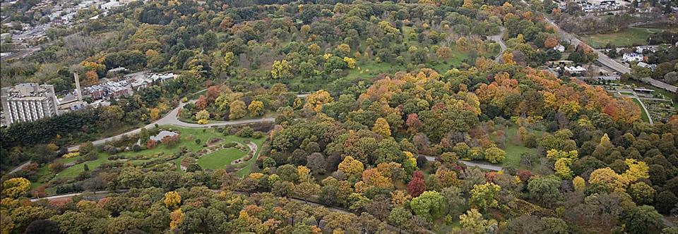 The Arnold Arboretum