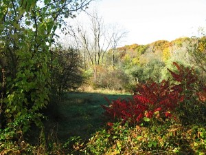 Bussey Brook Meadow in the fall