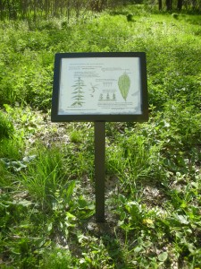 Interpretive signs in Bussey Brook Meadow