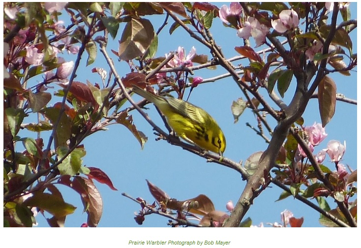Spring Bird Walk, May 6th